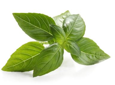 Healing Herbs: List of the Best Benefical Herbs - Seattle